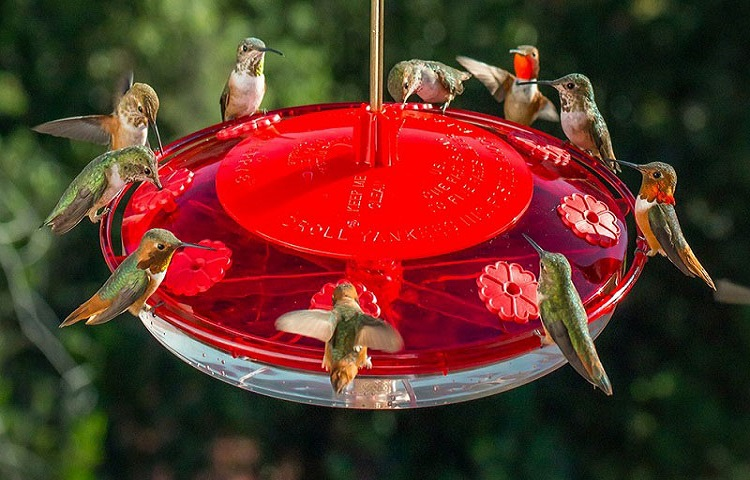 The Benefits of Large Hummingbird Feeders