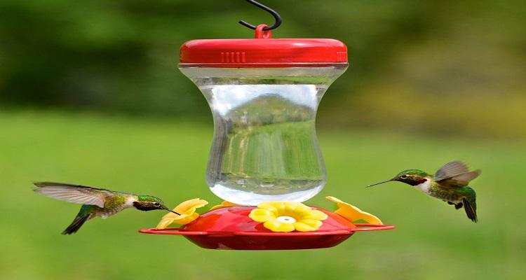 Top 3 Brands of Hummingbird Feeders