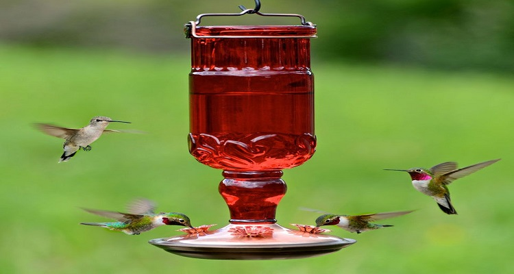 How to Find a Glass Hummingbird Feeder to Delight Your Senses