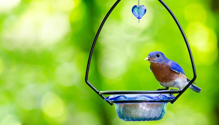 An Effective Guide for Backyard Birdwatcher's about Hummingbird Feeders