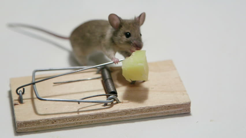 The Overview of Electronic Rat Traps