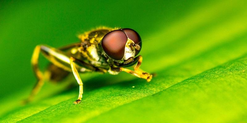 The Basics of Eliminating Fruit Flies