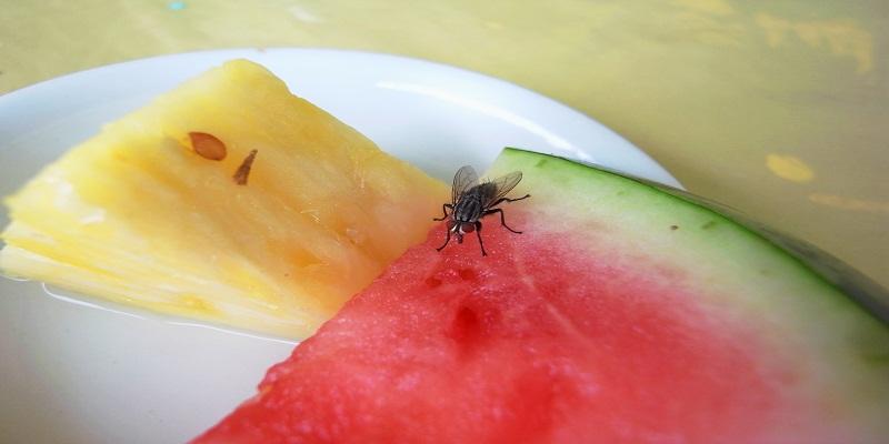 Ways to Get Rid of Fruit Flies