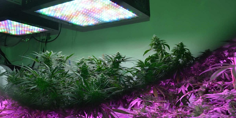 Why are LED Grow Lights Good for Growing Indoor Plants?