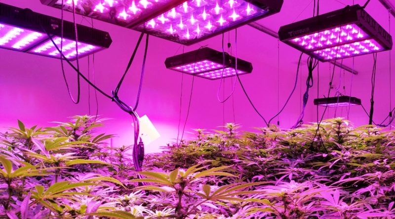 Why Should You Prefer LED Grow Lights Over Other Lighting Options?