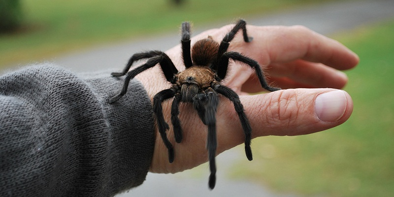 Are Spiders Dangerous for Humans?