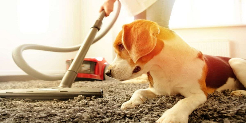 How to Buy The Best Vacuum Cleaner To Deal With Pet Hair?