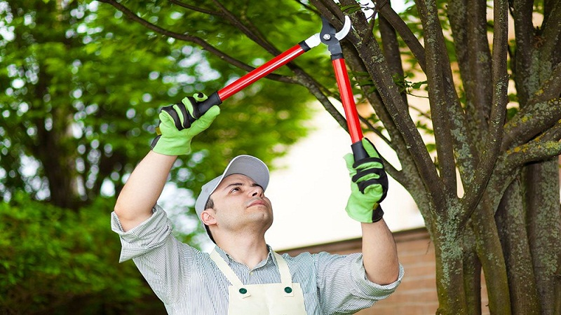 Tips To Prune A Tree Correctly & At The Right Time